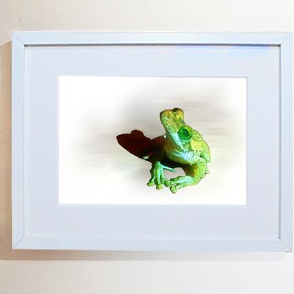 Invertebrates and Amphibians
